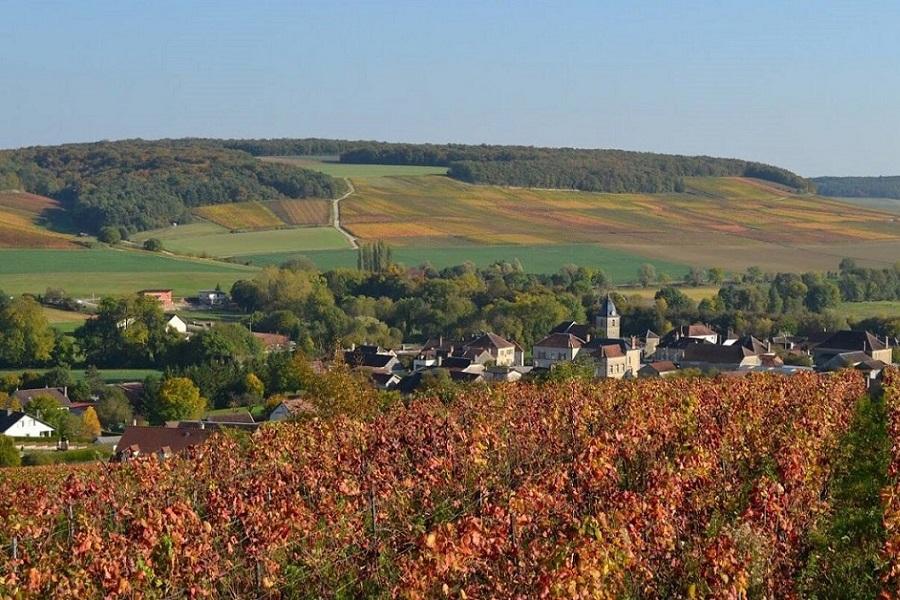Cours du Vin en Anglais