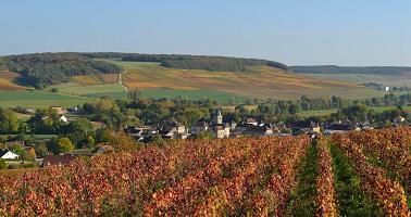Cours d'anglais dans l'industrie du vin